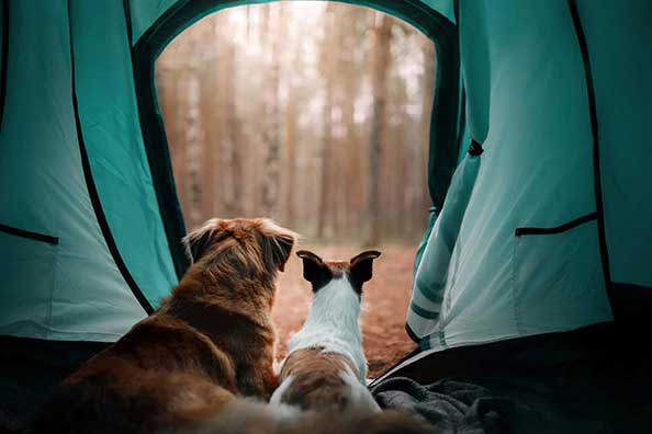 How to Prepare for a Camping Trip with Pets